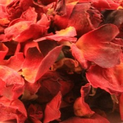 Rode rozen bloemblaadjes heel