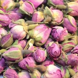Roze rozenknoppen heel