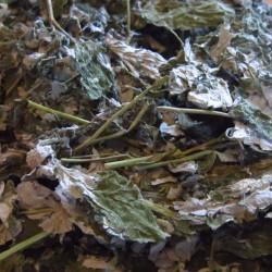 Frambozen bladeren heel