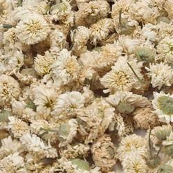 Roomse kamille bloemen heel