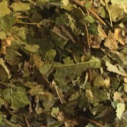 Witch Hazel bladeren gesneden